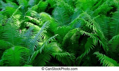 Man going through green fern in tropical forest.