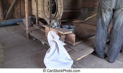man grain harp barn - farmer work with old manual grain...