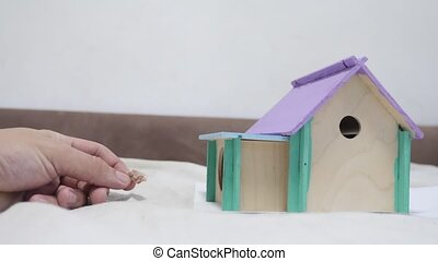man hand feeding a rat rat coming out climbs on top of wooden house sniffing nose a hole cute video out of the burrow of a house and sniffs food in search of food . cute mouse albino rat pet goes to the house. white rat concept cute lifestyle