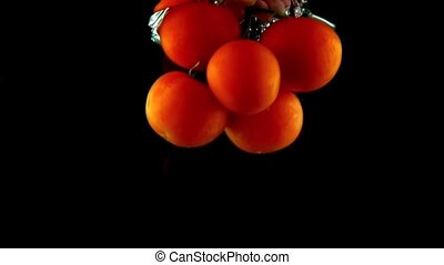 Man hand pulling bunch of red ripe tomatoes out of water super slow motion