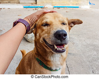 man hand touch on the dog's head