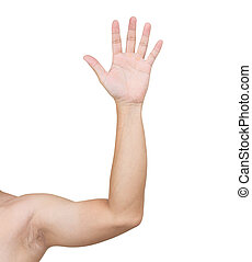 Man hands isolated on white background, clipping path