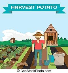 Man harvesting potato in a field in the village. Manual...