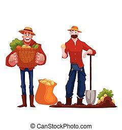 Man harvesting potato in the field