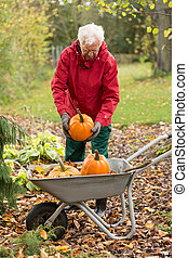 Man harvesting pumpkins in a garden