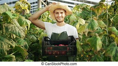 Man Harvesting Vegetables in Greenhouse - Happy male worker...