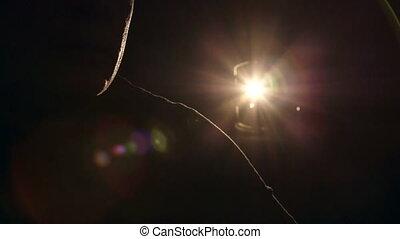 man, het schouwen rolprent, op, film projector, in, donkere...