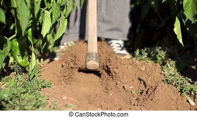 Man Hoeing Vegetable Garden Soil. Slow motion footage. - Man...