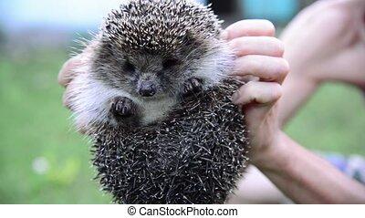 man holding a hedgehog on hands