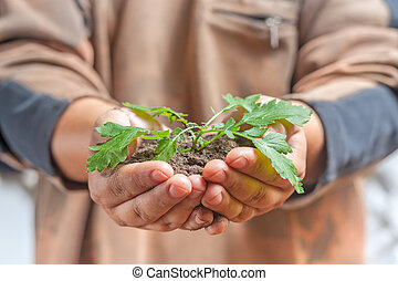 Man holding a small plant
