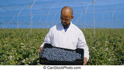 Man holding blueberries in crate 4k - Portrait of a mixed ...