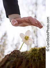 Man holding hand over flower