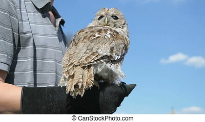 Man holding on his hand a owl to attract attention - Man...