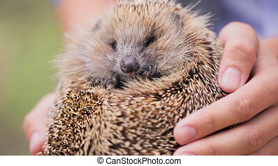 Man holding prickly hedgehog on photosession outdoors