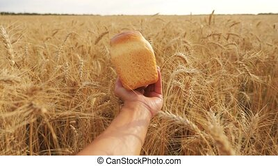 man holds a bread in a lifestyle wheat field. slow motion video. successful agriculturist in field of wheat. harvest time. bread baking vintage agriculture concept