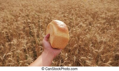 man holds a bread in a wheat field.slow motion video....