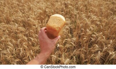 man holds a golden bread in a lifestyle wheat field. slow motion video. successful agriculturist in field of wheat . harvest time. bread baking vintage agriculture concept