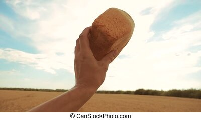 man holds a golden bread in a wheat field against the blue sky. slow motion video. successful agriculturist in field of wheat . harvest lifestyle time. bread baking vintage agriculture concept