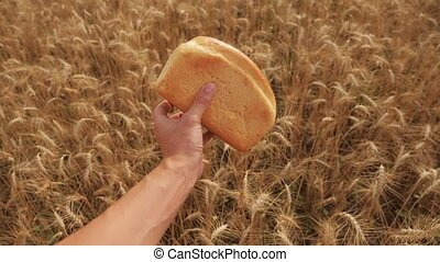 man holds a golden bread in a wheat field. lifestyle slow motion video. successful agriculturist in field of wheat . harvest time. bread baking vintage agriculture concept