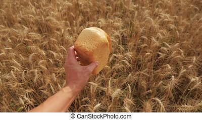 man holds a golden bread in a wheat field. slow motion lifestyle video. successful agriculturist in field of wheat . harvest time. bread baking vintage agriculture concept