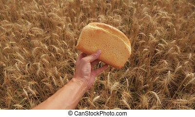 man holds a golden bread in a wheat field. slow motion video. lifestyle successful agriculturist in field of wheat . harvest time. bread baking vintage agriculture concept
