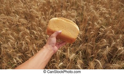 man holds a golden bread in a wheat field. slow motion video lifestyle. successful agriculturist in field of wheat . harvest time. bread baking vintage agriculture concept