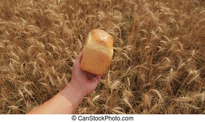 man holds a golden bread in a wheat field. slow motion video. successful agriculturist in field of wheat. harvest time. bread baking lifestyle vintage agriculture concept