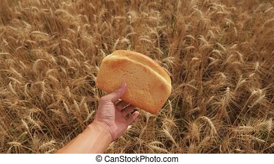 man holds a golden bread in a wheat field. slow motion video. successful agriculturist in field of wheat. harvest time. bread baking vintage agriculture lifestyle concept