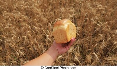 man holds a golden bread in a wheat field. slow motion video. successful agriculturist in field of wheat. harvest time. lifestyle bread baking vintage agriculture concept