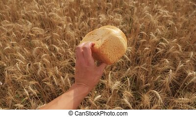 man holds a golden bread in a wheat field. slow motion video. successful agriculturist in field of wheat. harvest time lifestyle. bread baking vintage agriculture concept