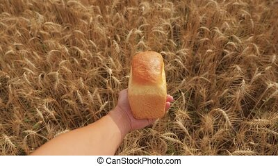 man holds a golden bread in a wheat field. slow motion video. successful agriculturist in field of wheat. lifestyle harvest time. bread baking vintage agriculture concept