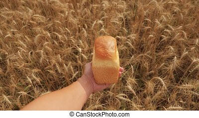 man holds a golden bread in a wheat field. slow motion video. successful agriculturist in field of wheat. harvest time. bread baking vintage agriculture concept lifestyle
