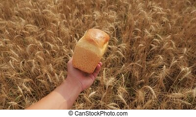 man holds a golden bread in a wheat field. slow motion video. successful agriculturist in field lifestyle of wheat . harvest time. bread baking vintage agriculture concept