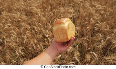 man holds a golden bread in a wheat field. slow motion video. successful lifestyle agriculturist in field of wheat . harvest time. bread baking vintage agriculture concept