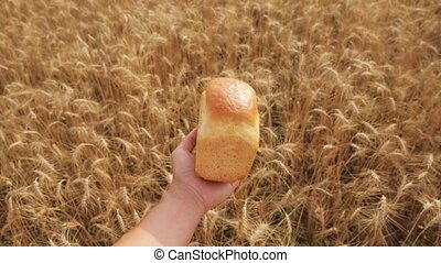 man holds a golden bread lifestyle in a wheat field. slow motion video. successful agriculturist in field of wheat . harvest time. bread baking vintage agriculture concept