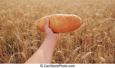 man holds a lifestyle loaf in a wheat field. slow motion...