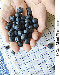 Man holds fresh blueberries in both hands - Older man with...