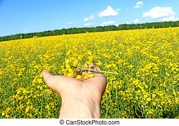 man holds in his hand a flower of rape, cloudy day