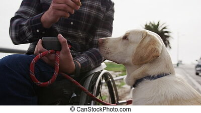 Front view of a Caucasian man in a wheelchair enjoying taking a walk with his dog in the countryside by the sea, giving his dog a treat in slow motion