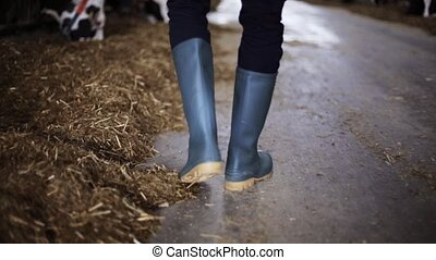 man in gumboots walking along cowshed on farm - agriculture...