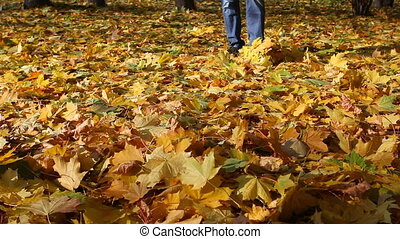 Man in jeans goes on the autumn fallen-down maple leaves