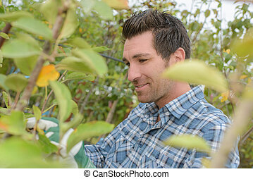 Man in orchard