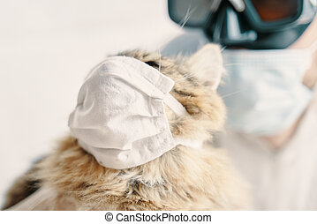 Man in suit and cat in a medical mask