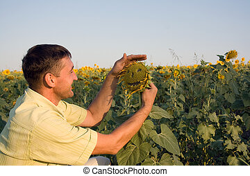Man in the field with sunflowers