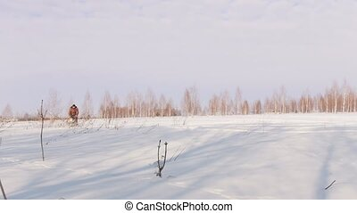 Man in winter clothes fast riding and maneuvering on mini snowmobile on deep snowdrifts in the field