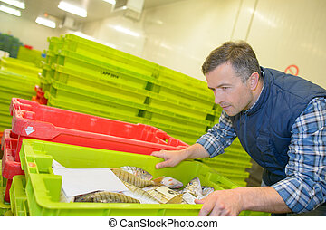 Man inspecting crate of fresh fish