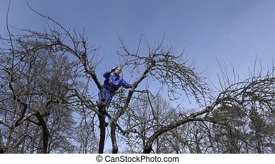 Man is cutting fruit tree twigs with trimmer in garden on a beautiful spring day.