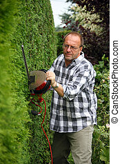 Man is cutting his hedges