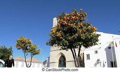 Man Jumping up to Take Orange Fruit