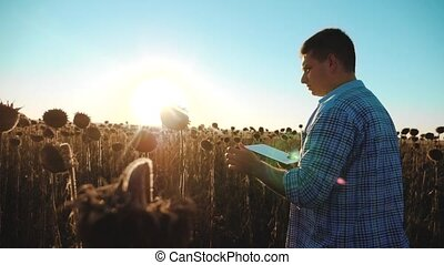 man lifestyle farmer with tablet in the sunflower works...